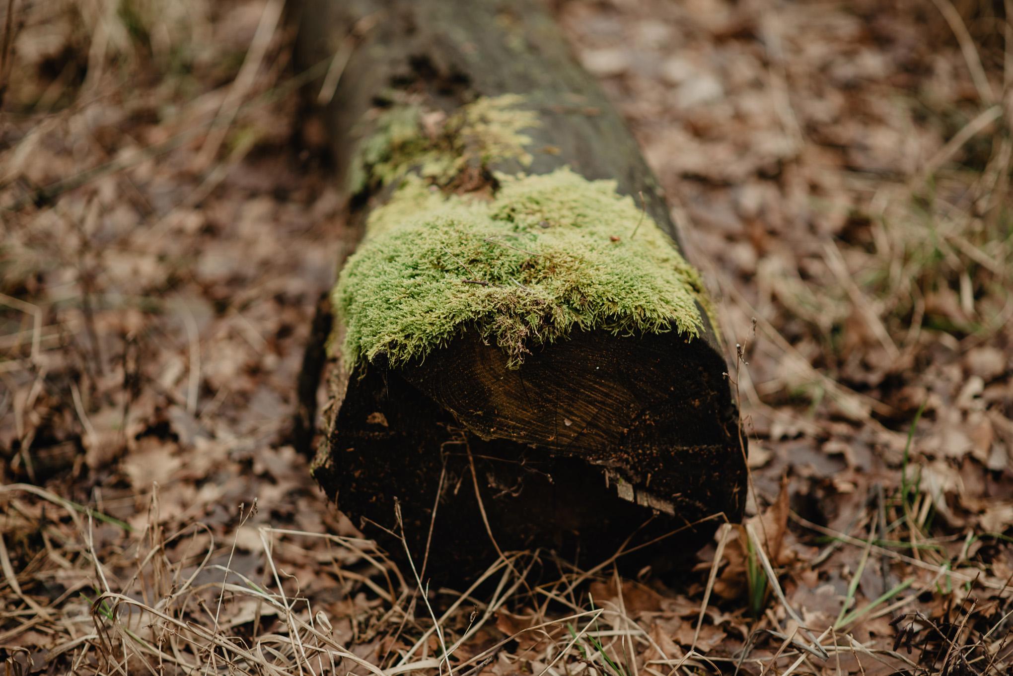 drzewo porośnięte w lesie